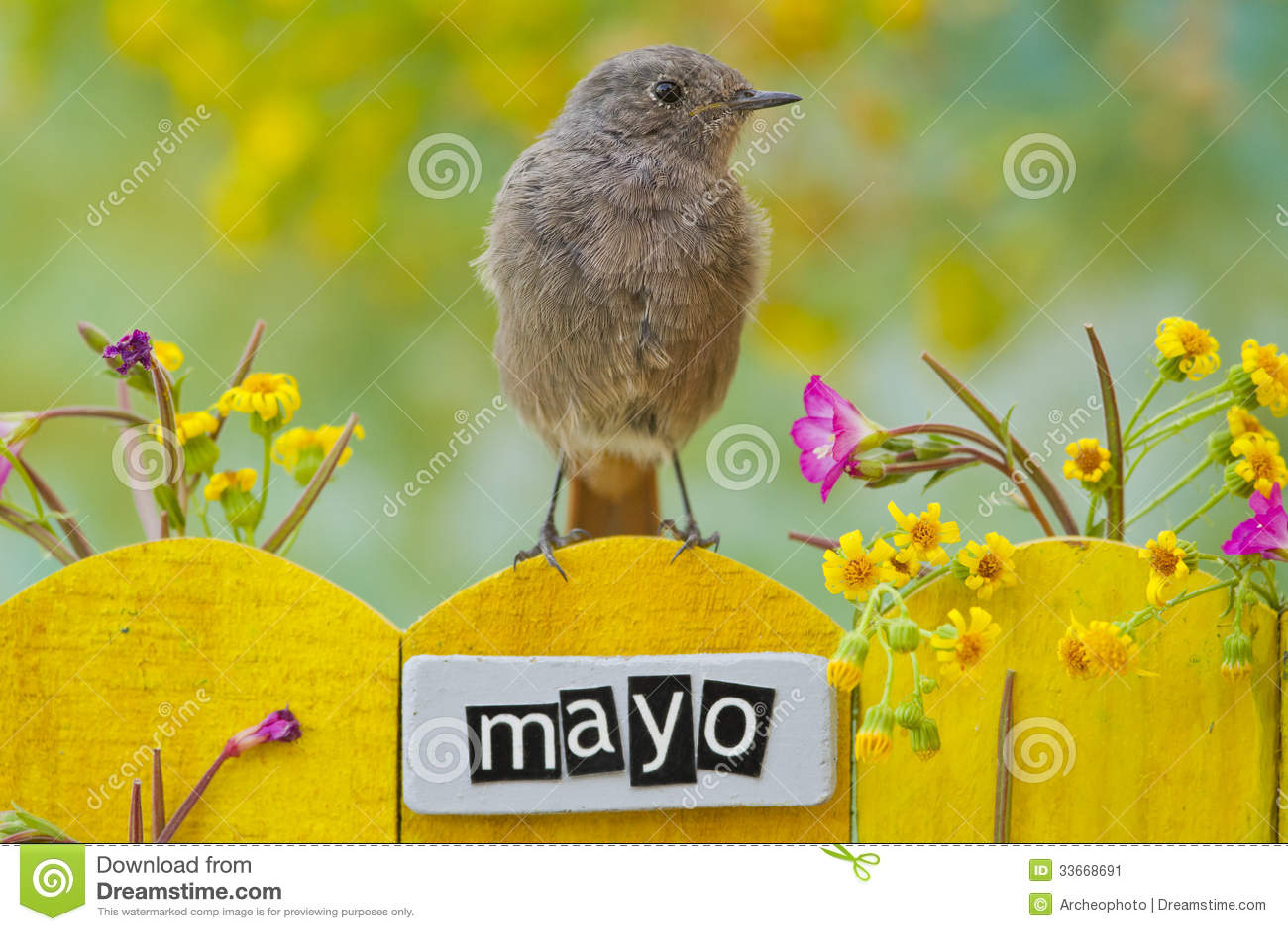 5月栖息的鸟装饰了篱芭