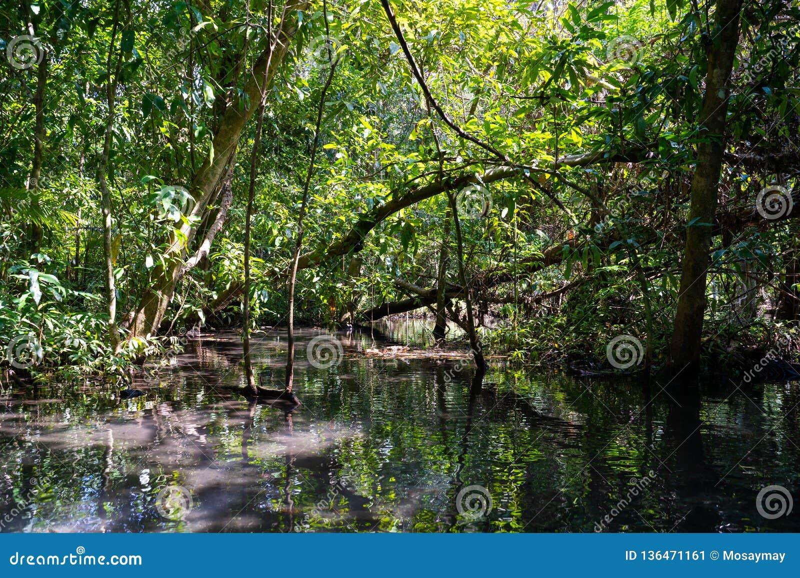 12月22日2018泰国:旅行美洲红树森林乘划艇