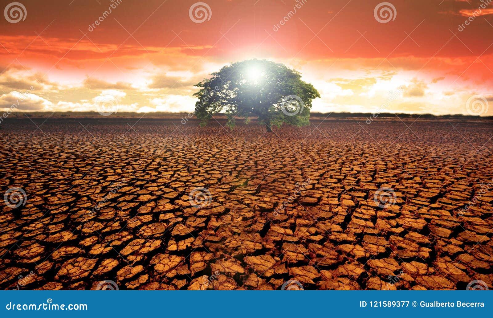 有一棵唯一绿色树的贫瘠沙漠土地