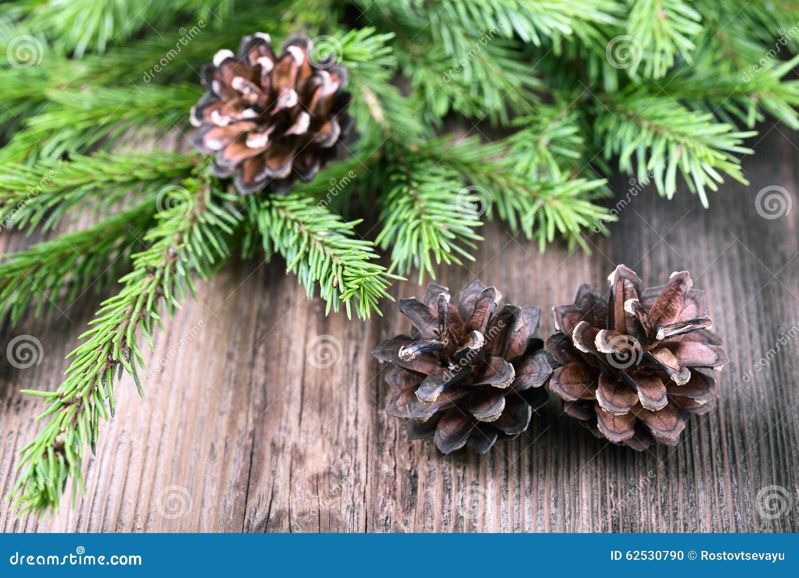 有三个锥体的杉树枝杈