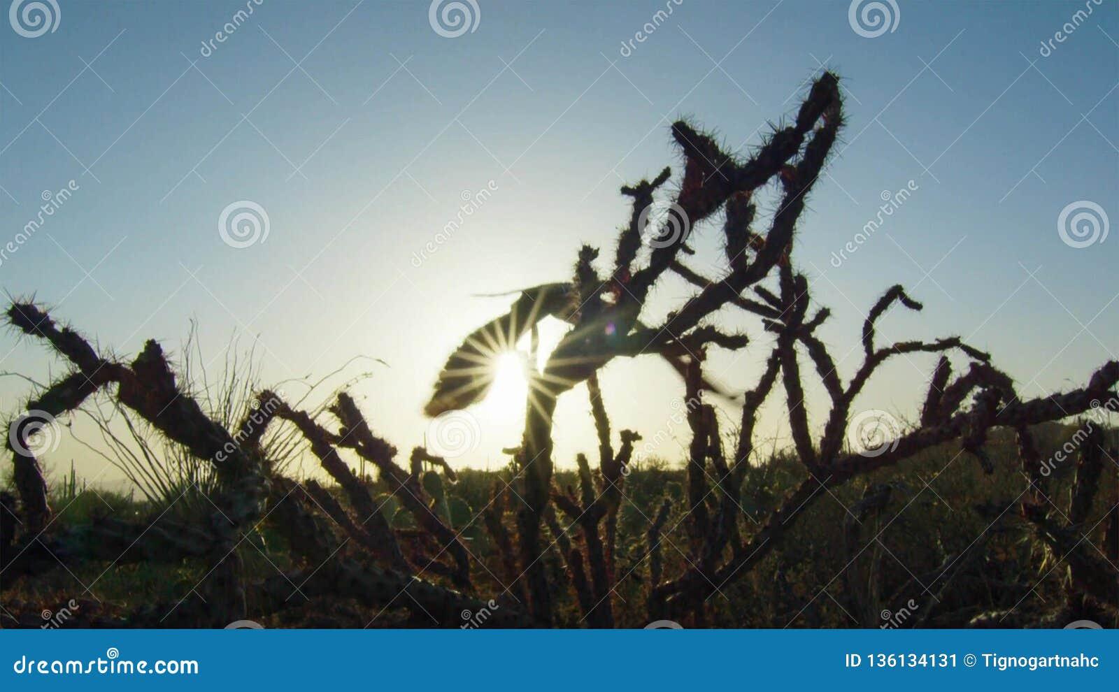 有仙人掌的多种类型的仙人掌森林在沙漠