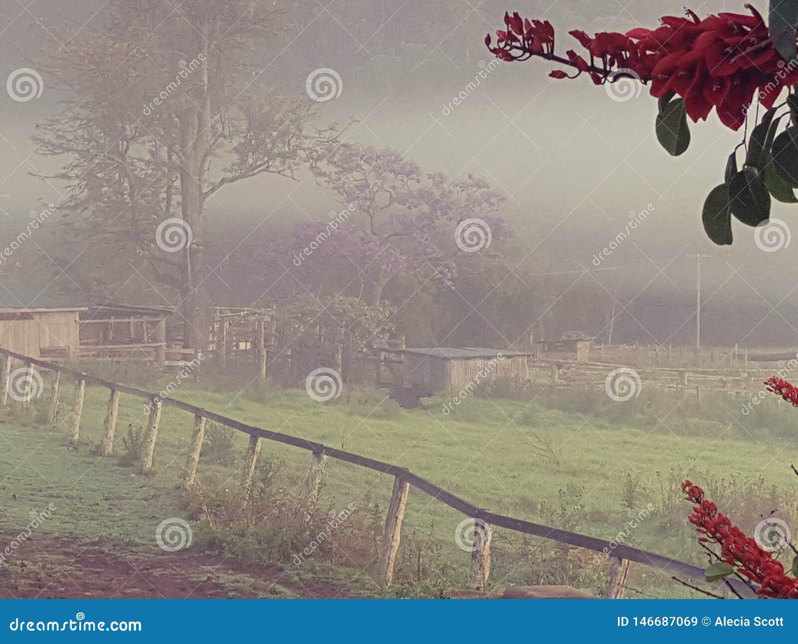 有农厂棚子的有雾的国家早晨小牧场