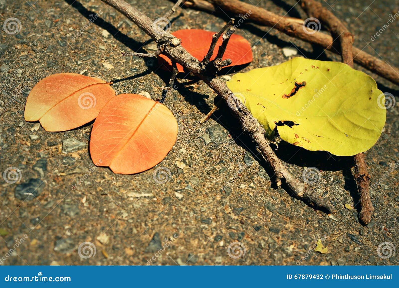 有分支的叶子