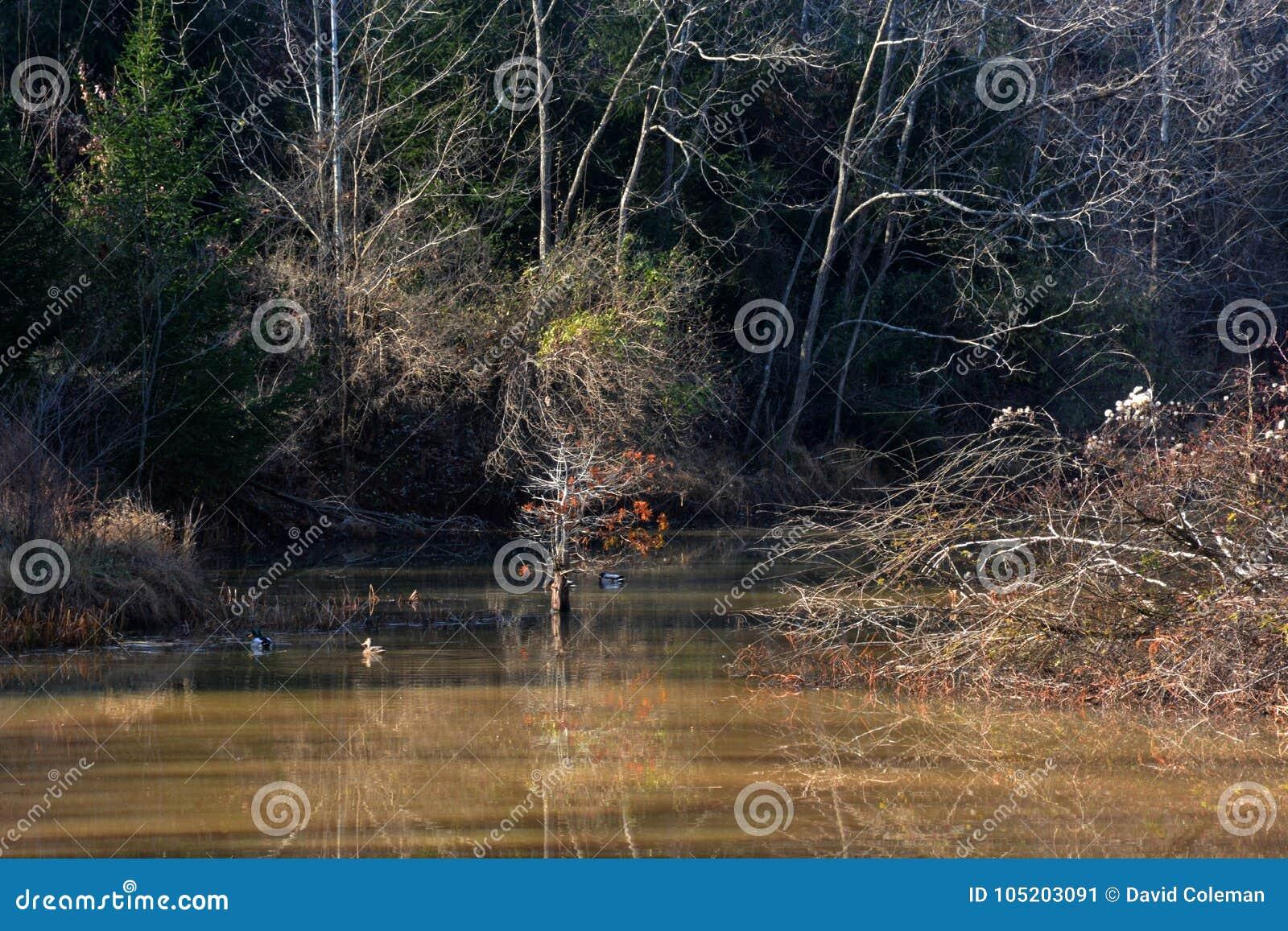 有反射的池塘