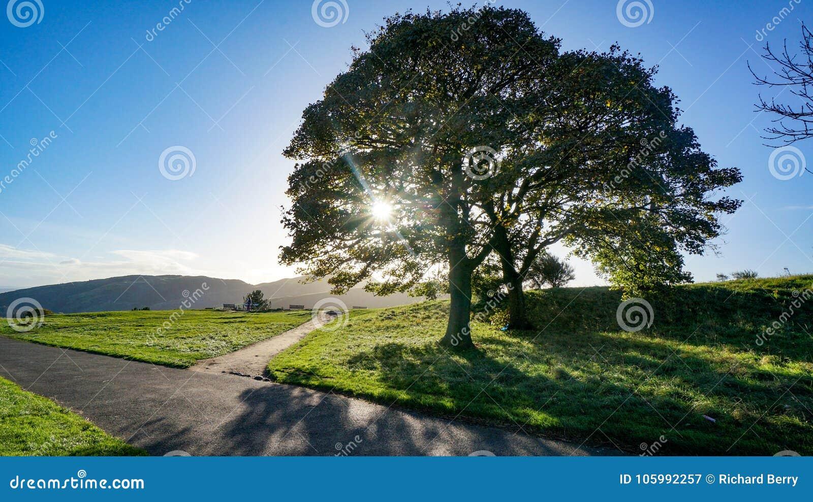 有发光通过树的太阳的交叉路