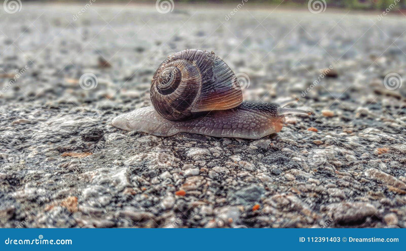 有吸引力的蜗牛