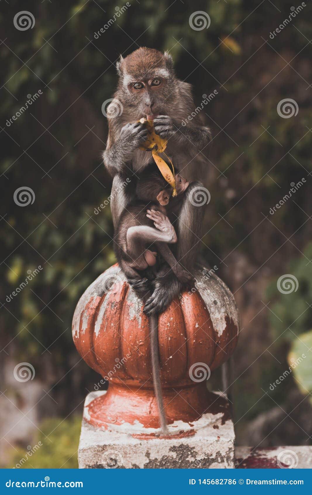 有婴孩的猴子母亲