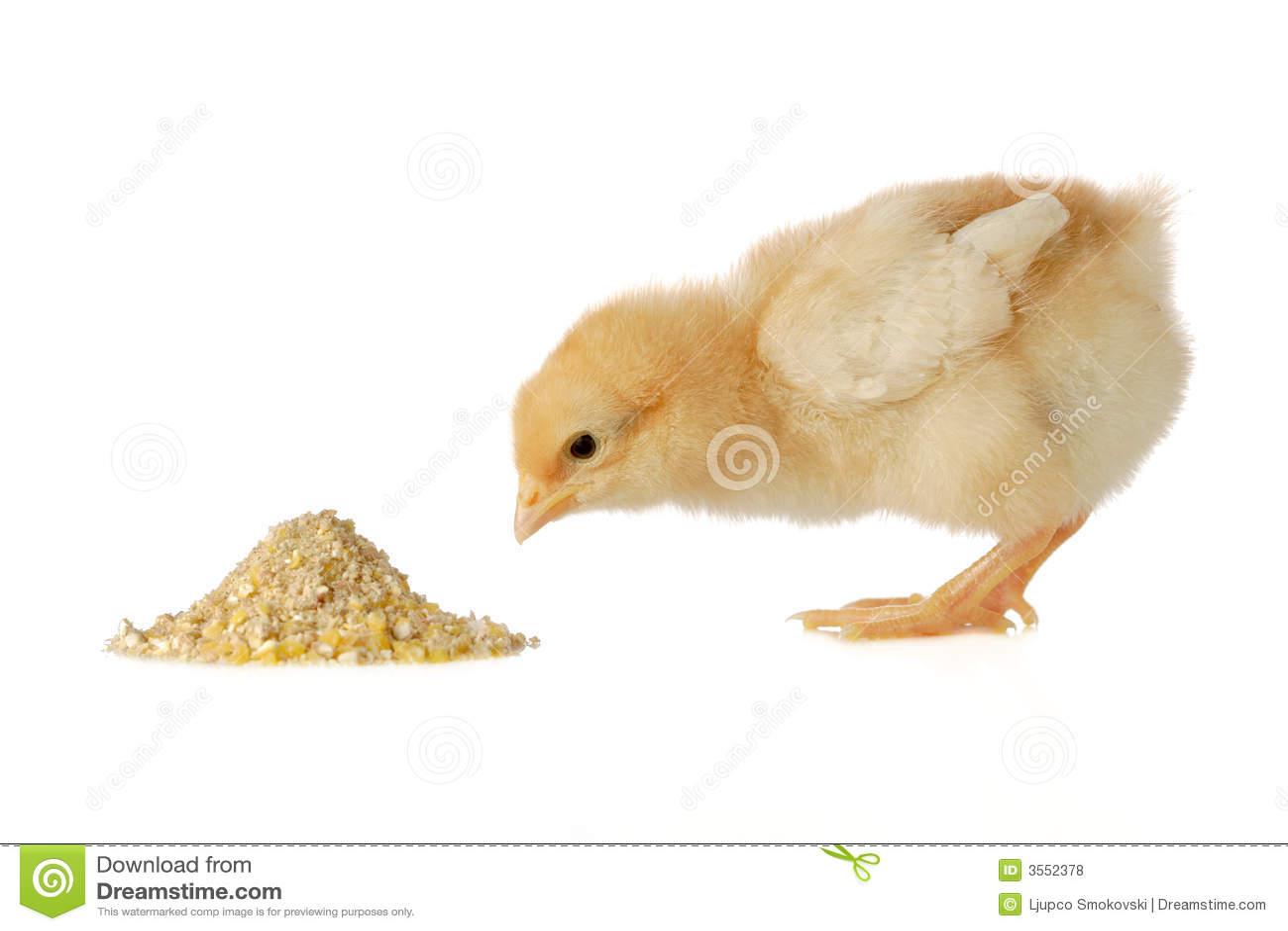 有婴孩的鸡膳食