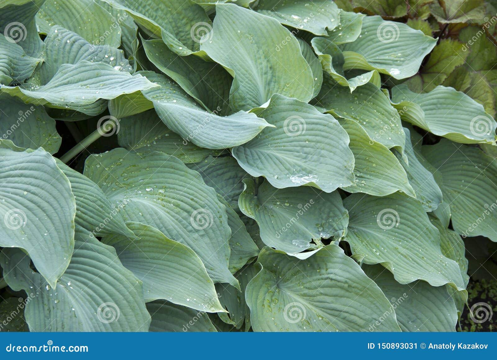有密集和针对性的叶子的一棵植物