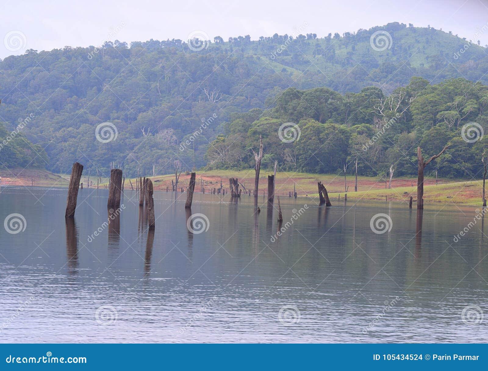 有小山的Periyar湖在背景, Thekkady,喀拉拉,印度中
