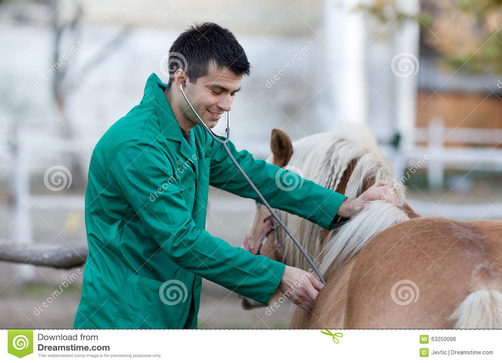 有小马马的兽医