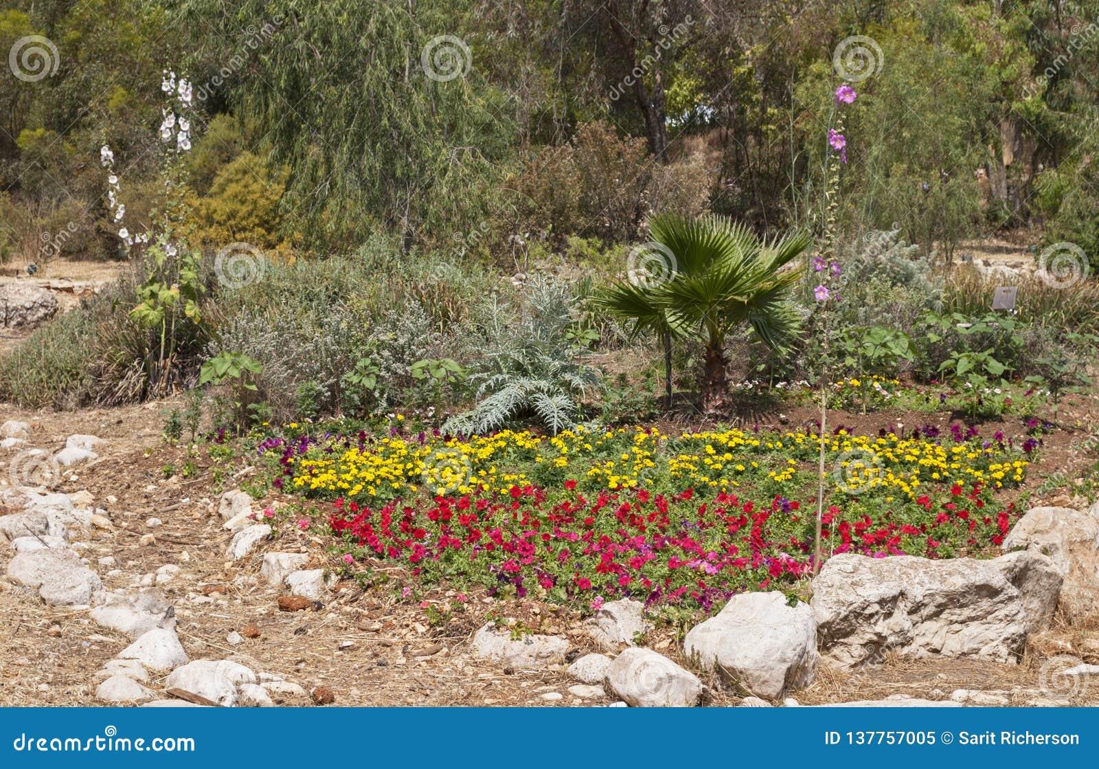 有岩石口音的自然看的花园