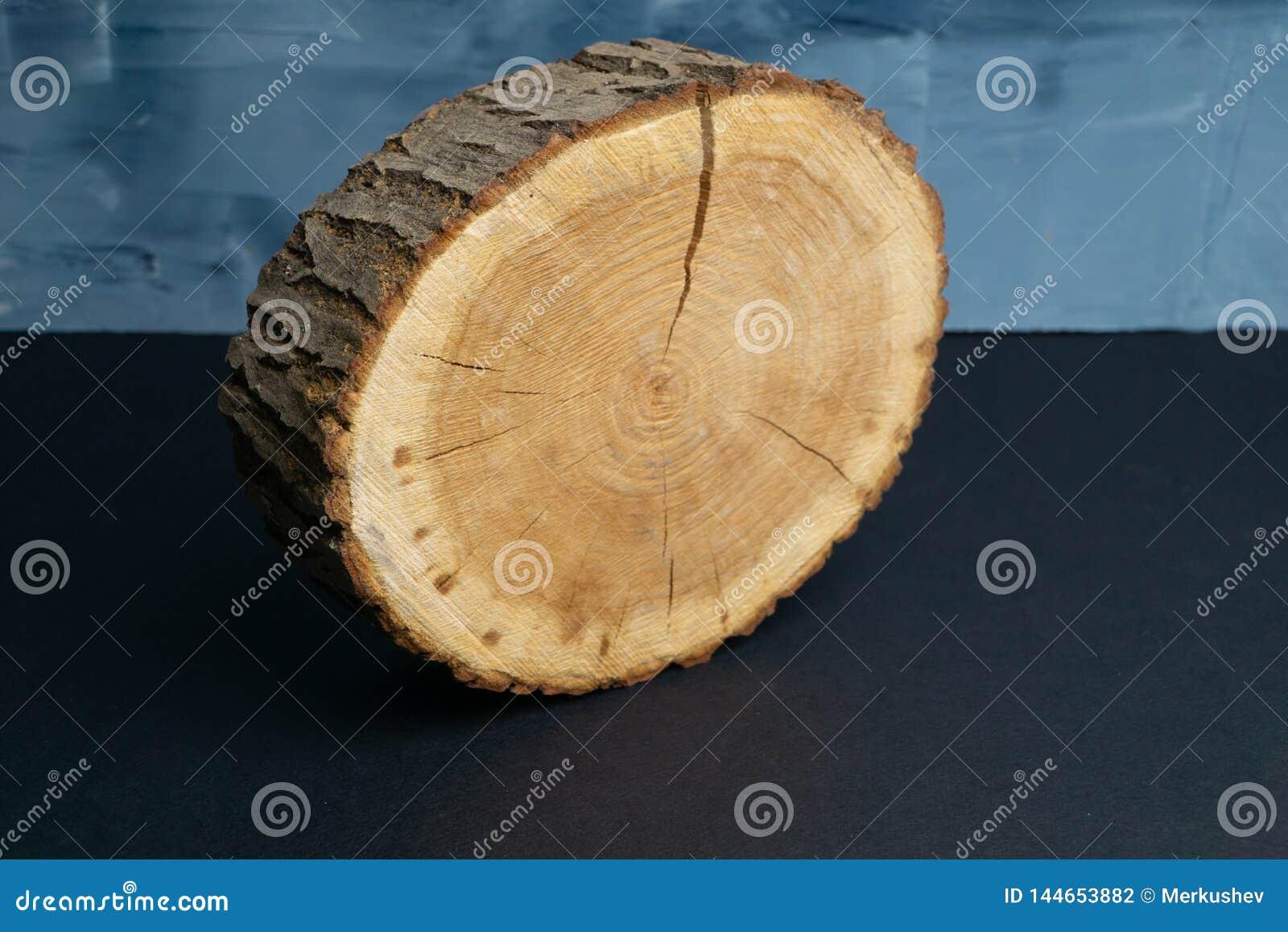 有年轮的破裂的树横断面在被绘的蓝色背景 木材片断特写镜头