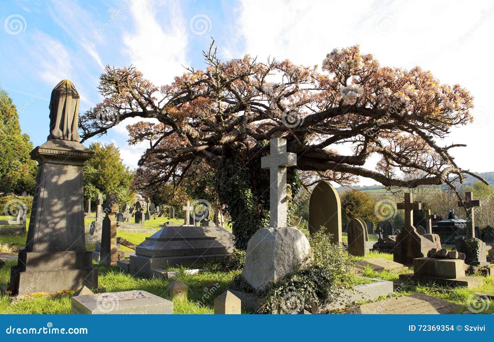 有开花的树的老,英国公墓