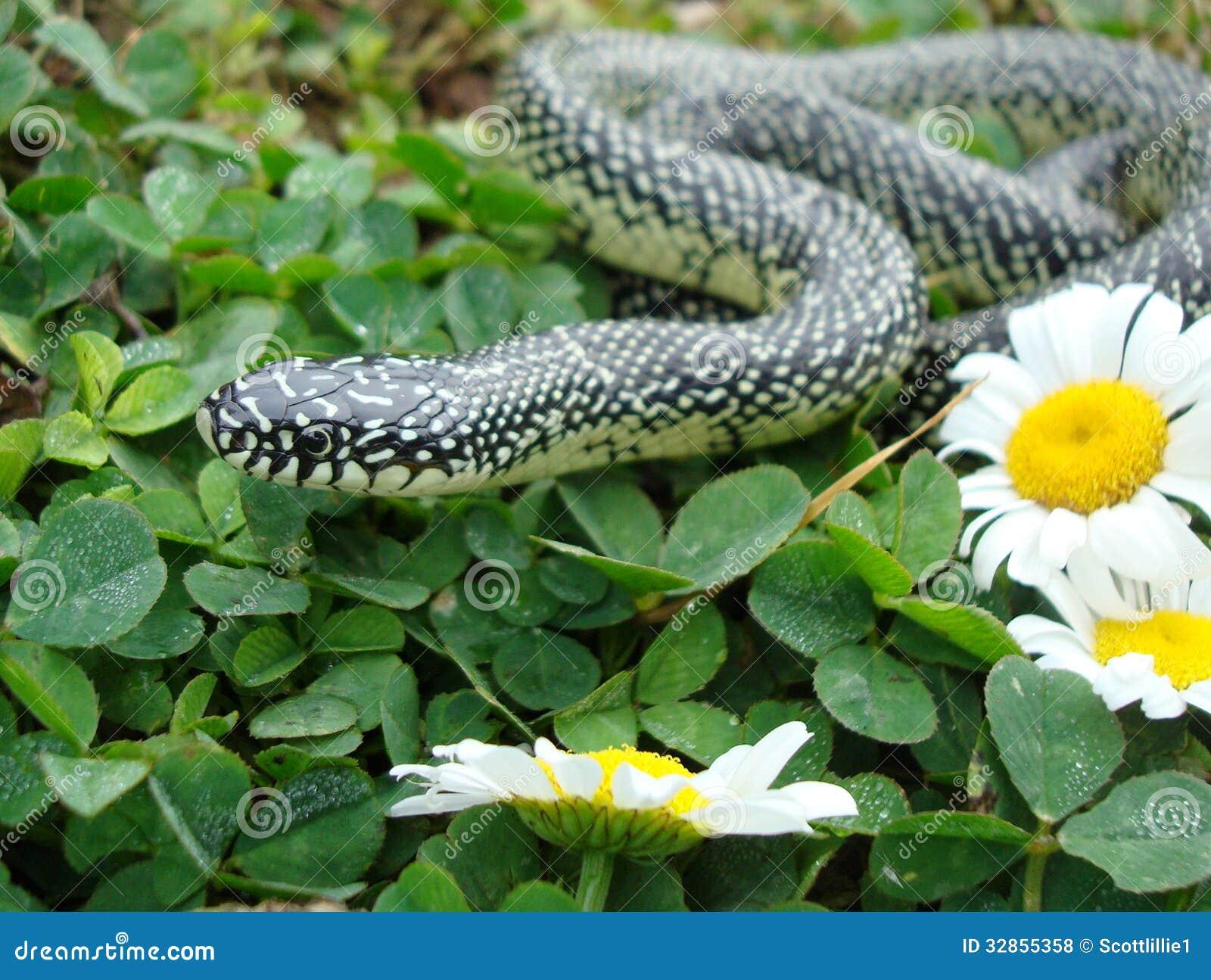 有斑点的巨蛇