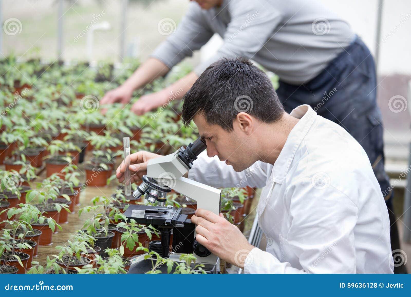 有显微镜的科学家在温室里
