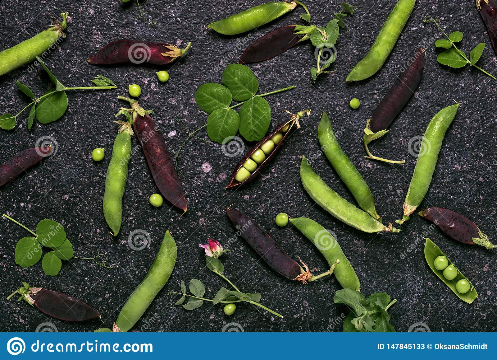 有机绿色和紫豌豆荚收获