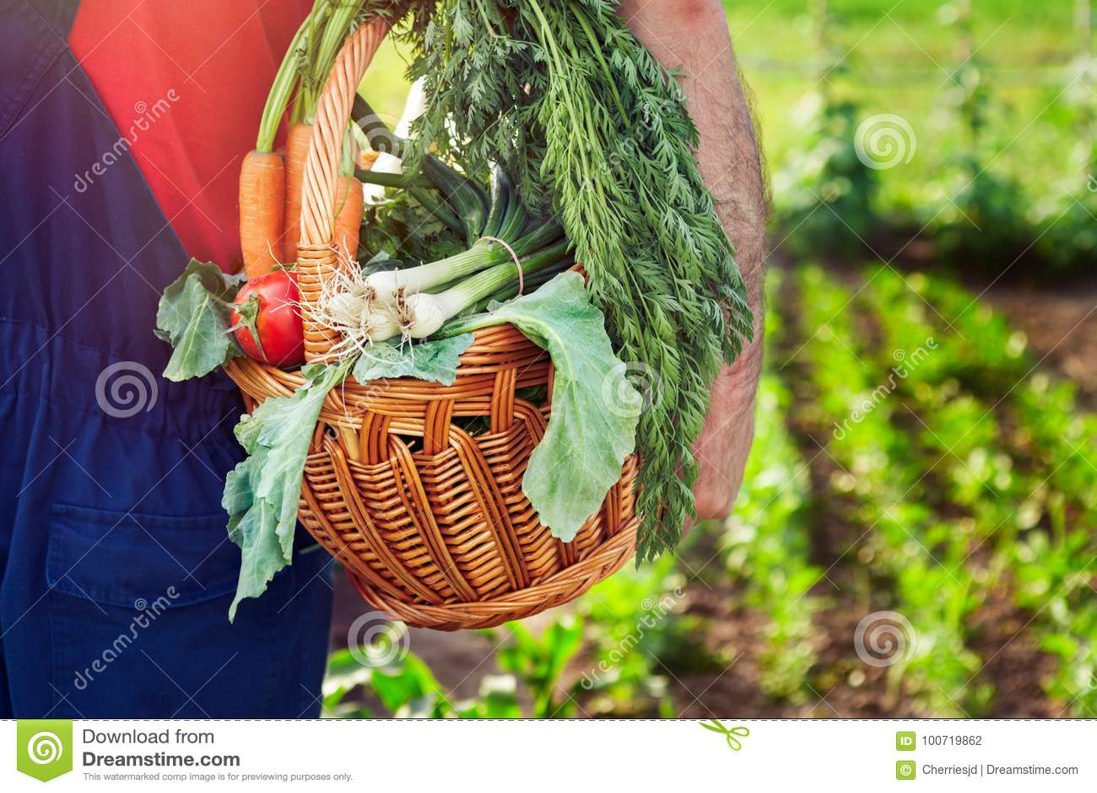 有机蔬菜 与菜的农夫运载的篮子