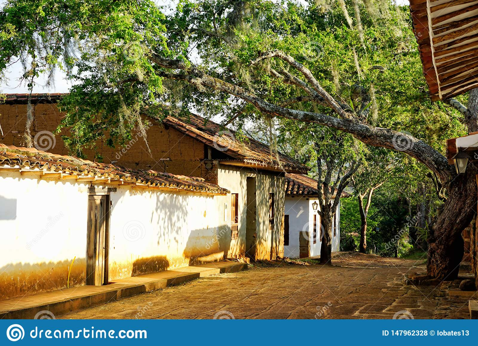 有树的殖民地议院在巴里查拉,哥伦比亚