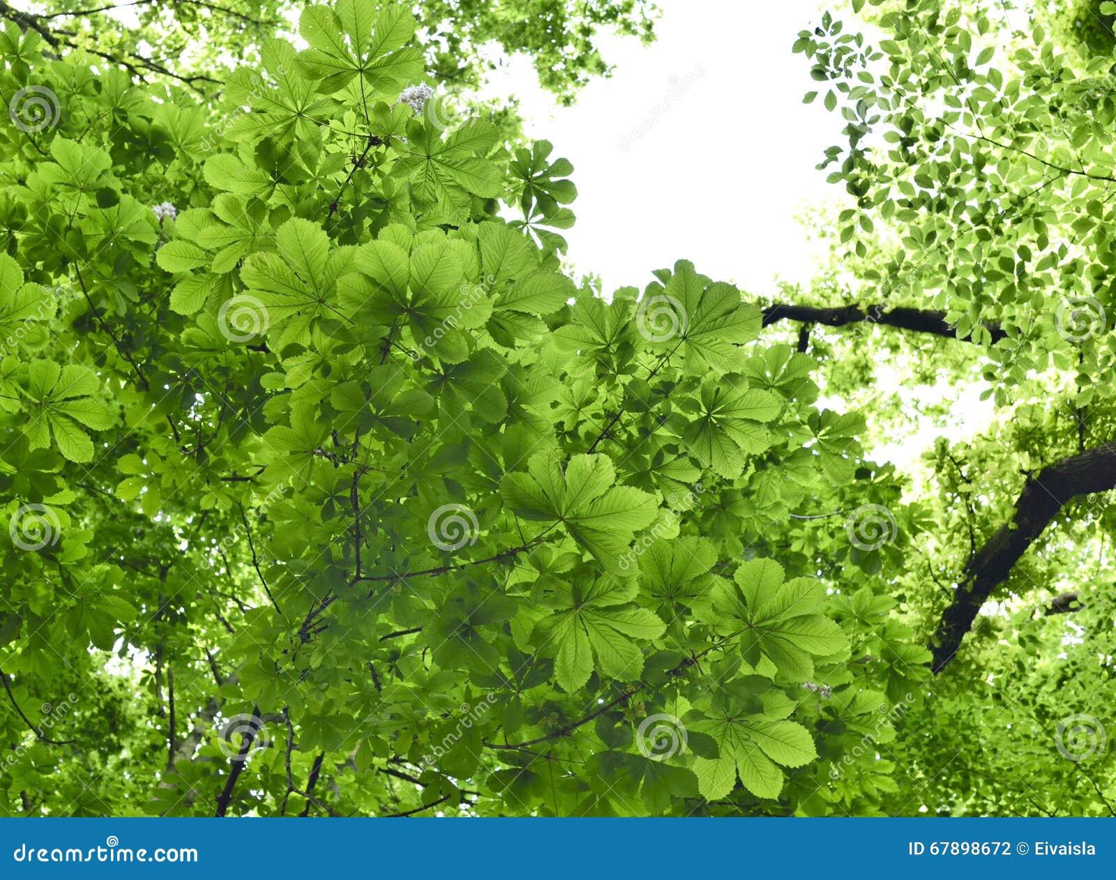 有栗树和山毛榉树的混杂的森林在阳光下