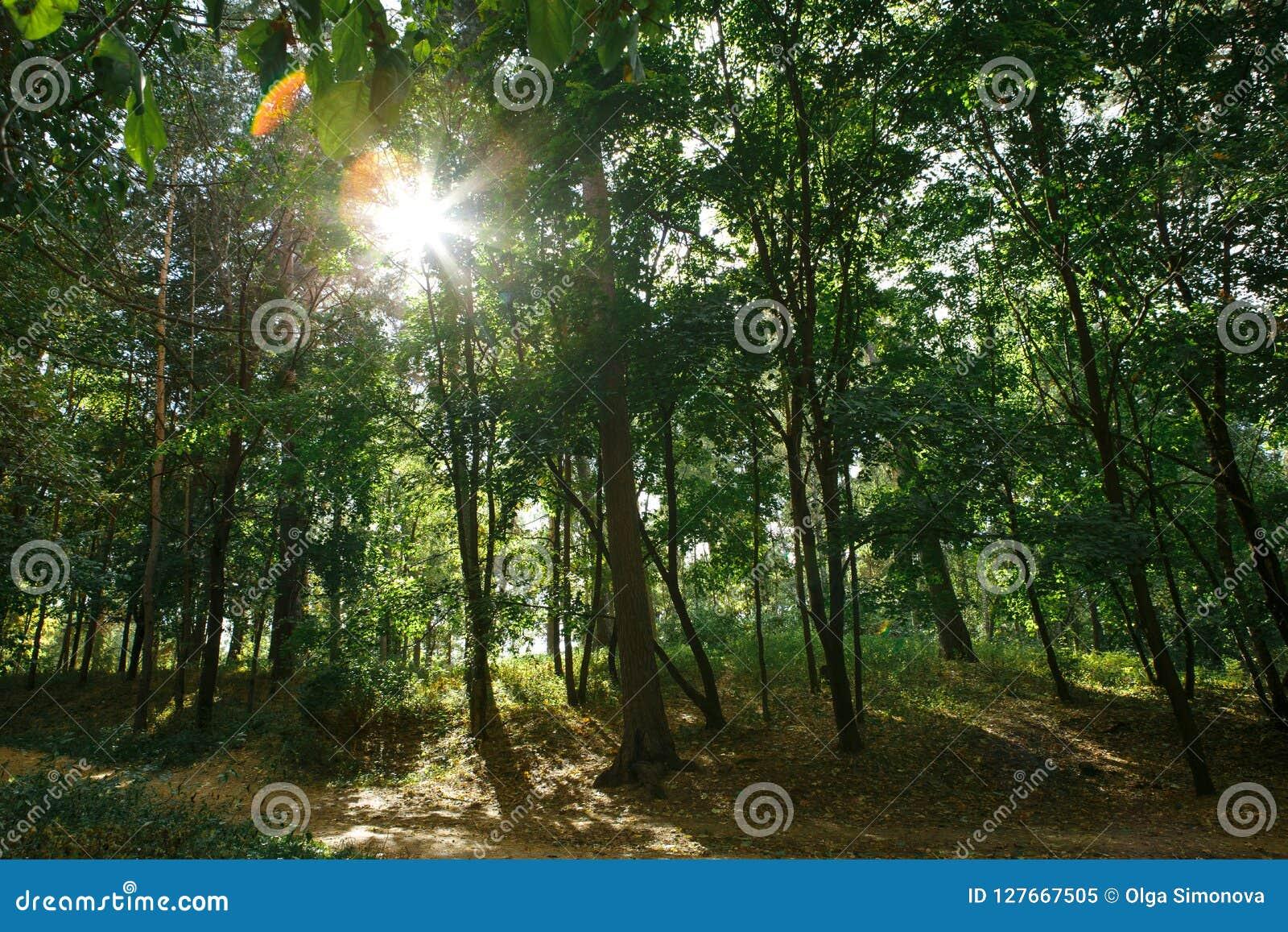 有根和漂流木头的绿色森林