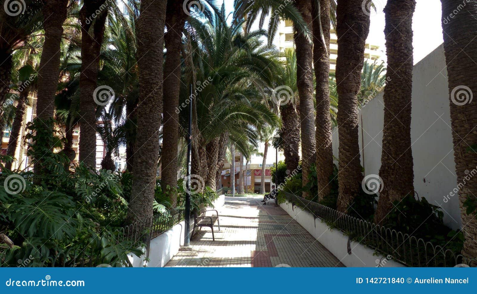 有棕榈树的道路