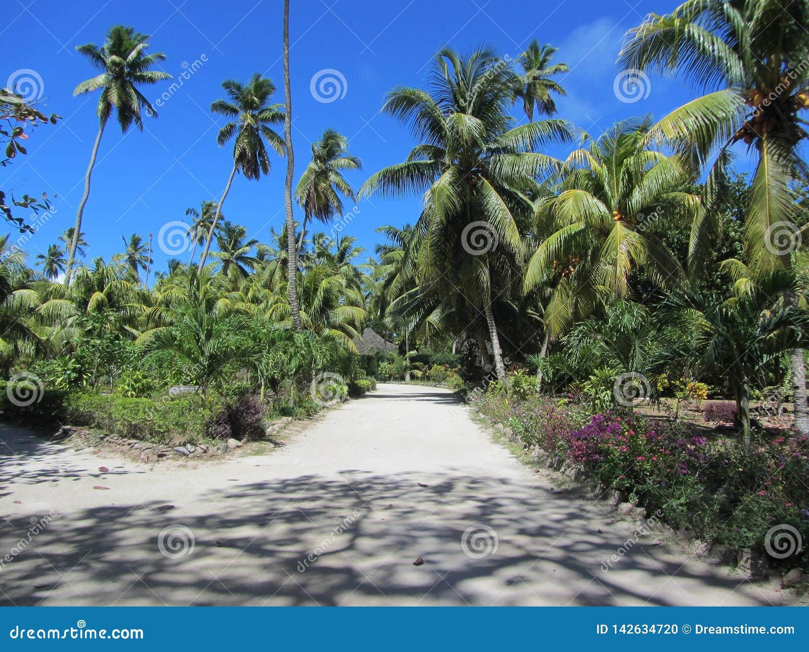 有棕榈的公园