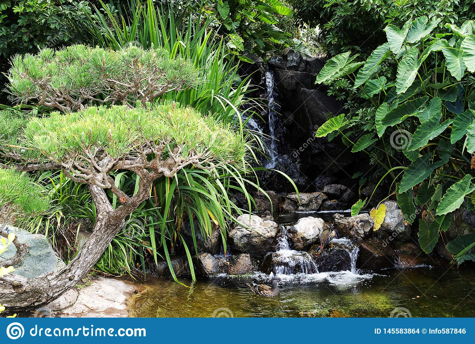 有水落的绿色庭院