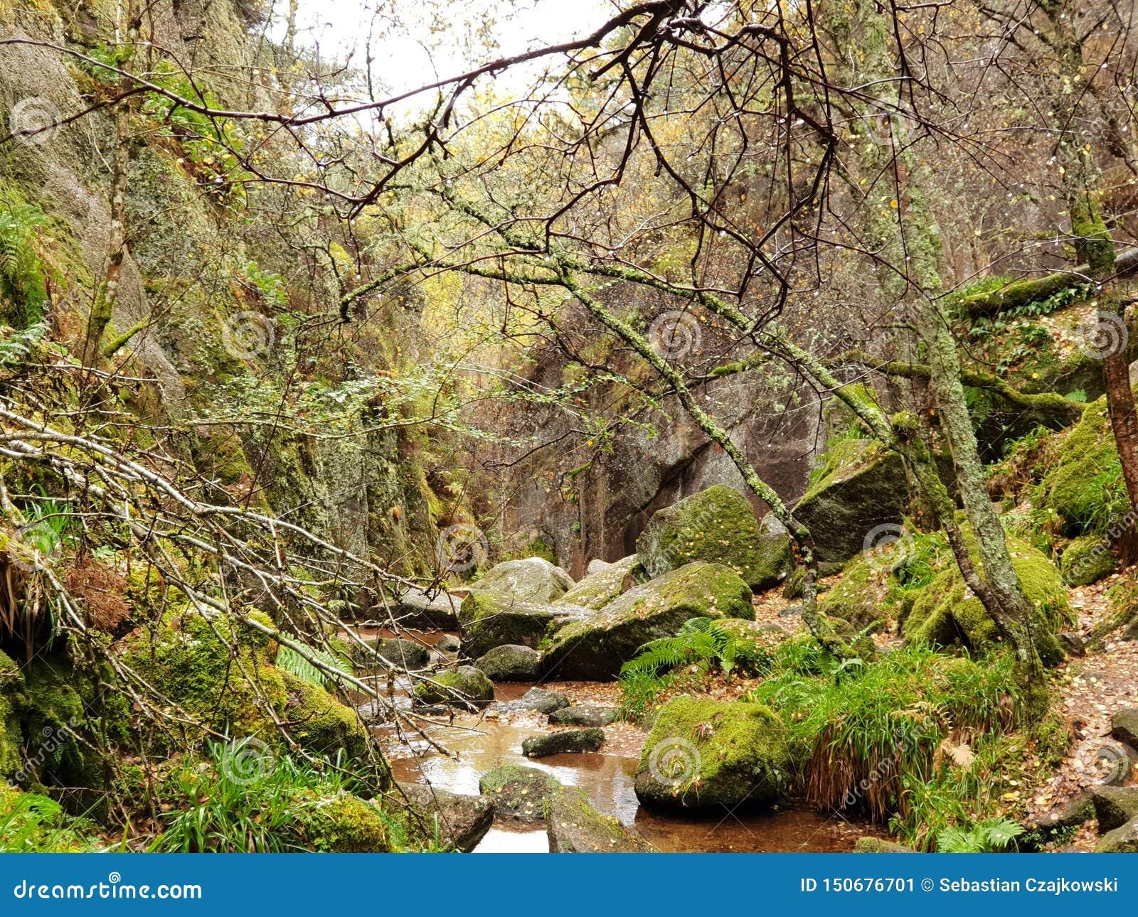 有河和石头的秋天森林