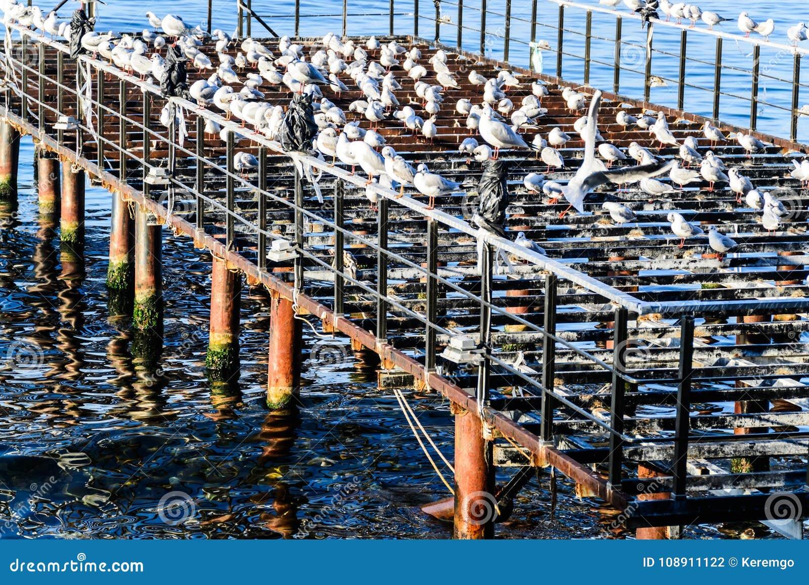 有海鸥和风平浪静的使荒凉的船坞