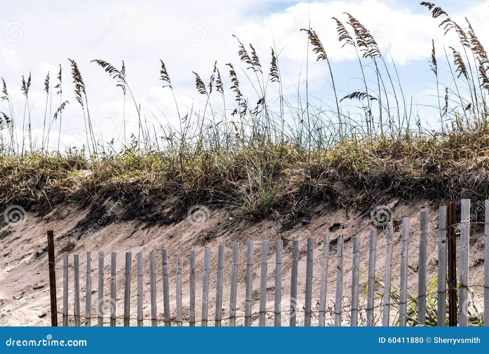 有海滩草的皮克特在Sandbridge的篱芭和沙丘