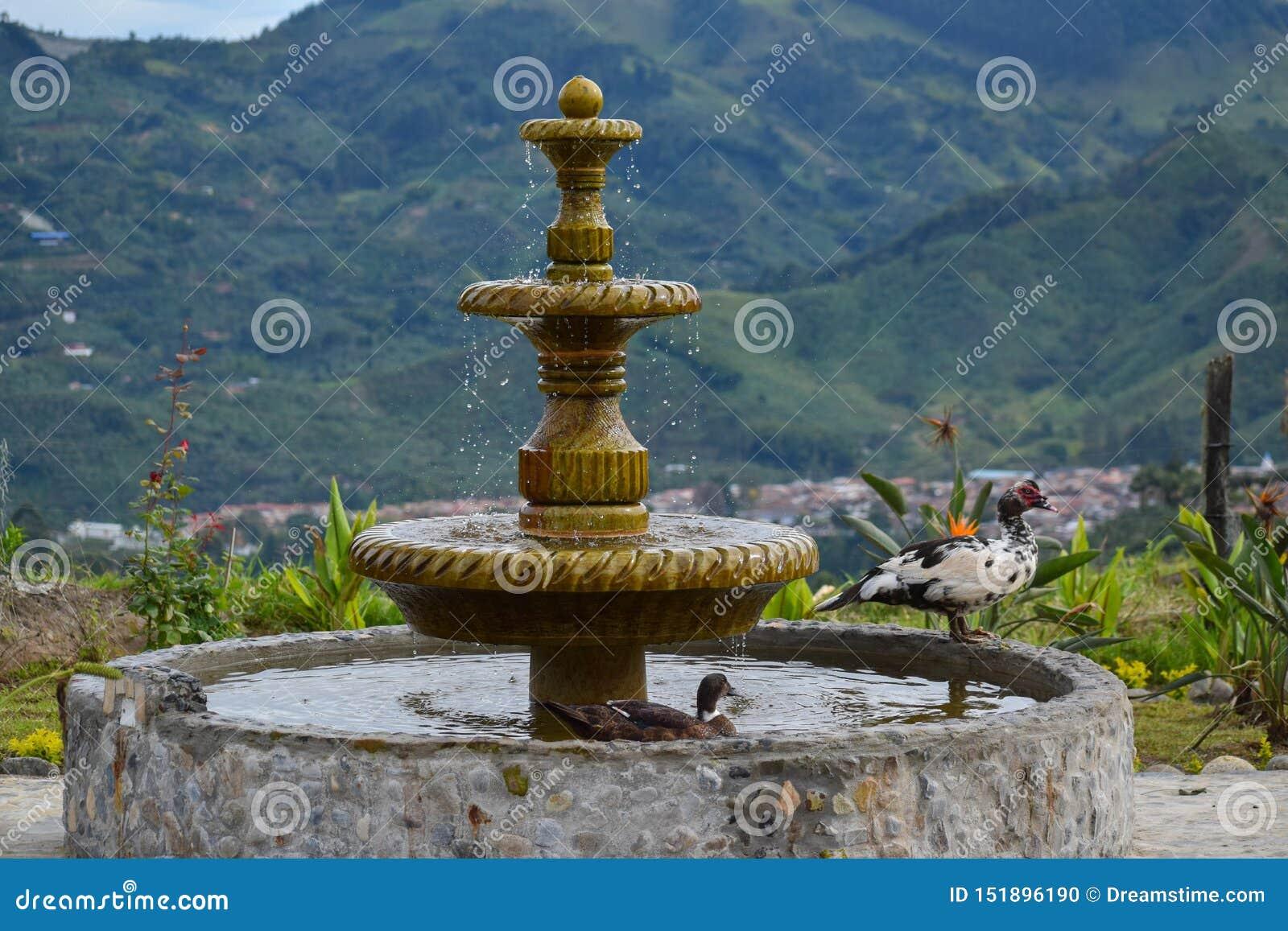 有游泳的鸭子的乡下喷泉