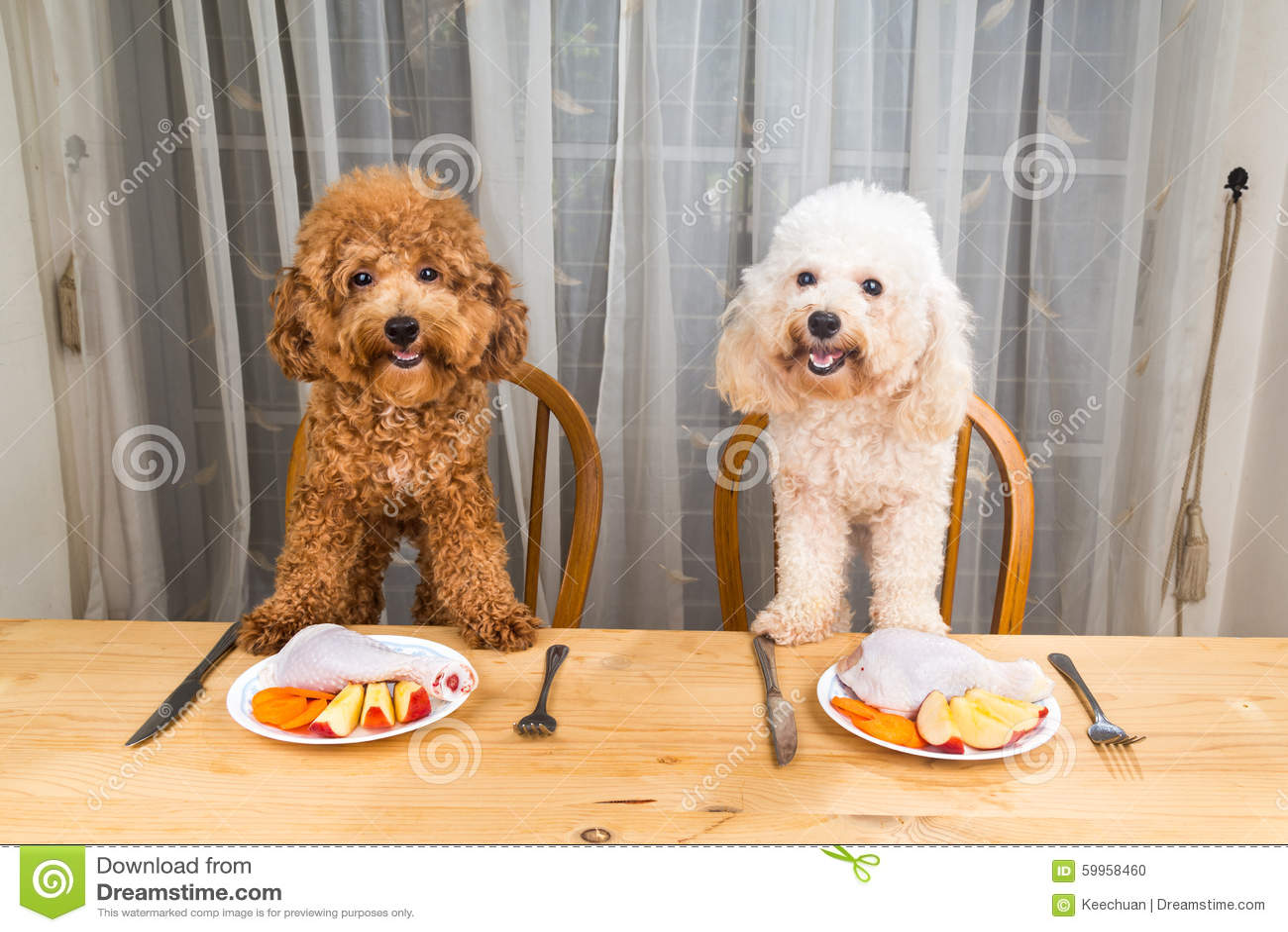 有激动的狗的概念在桌上的可口生肉膳食