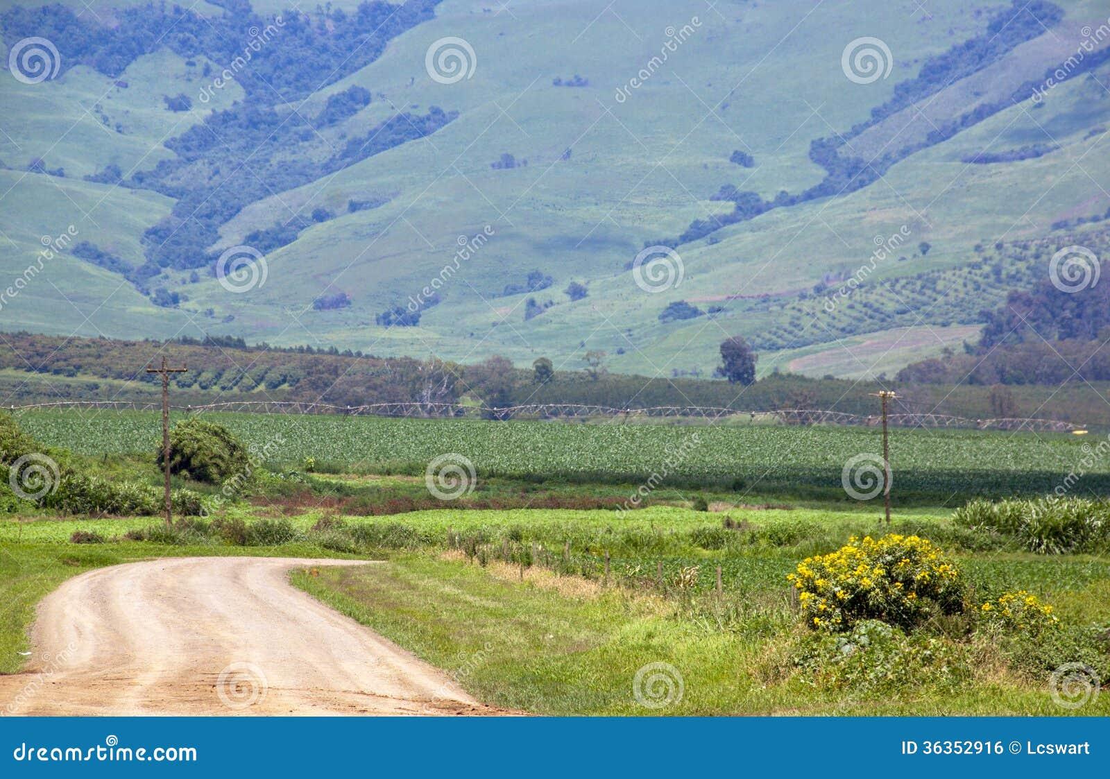 有灌溉系统的风力场路在麦地