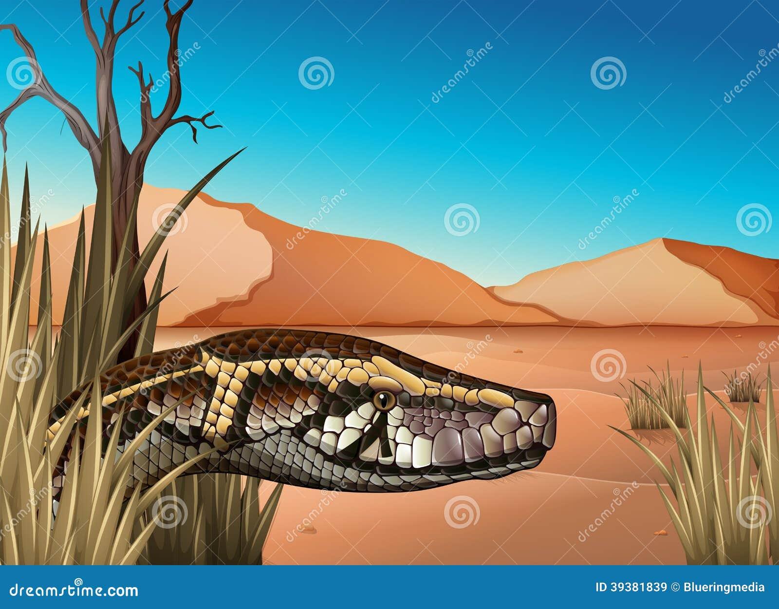 有爬行动物的一片沙漠