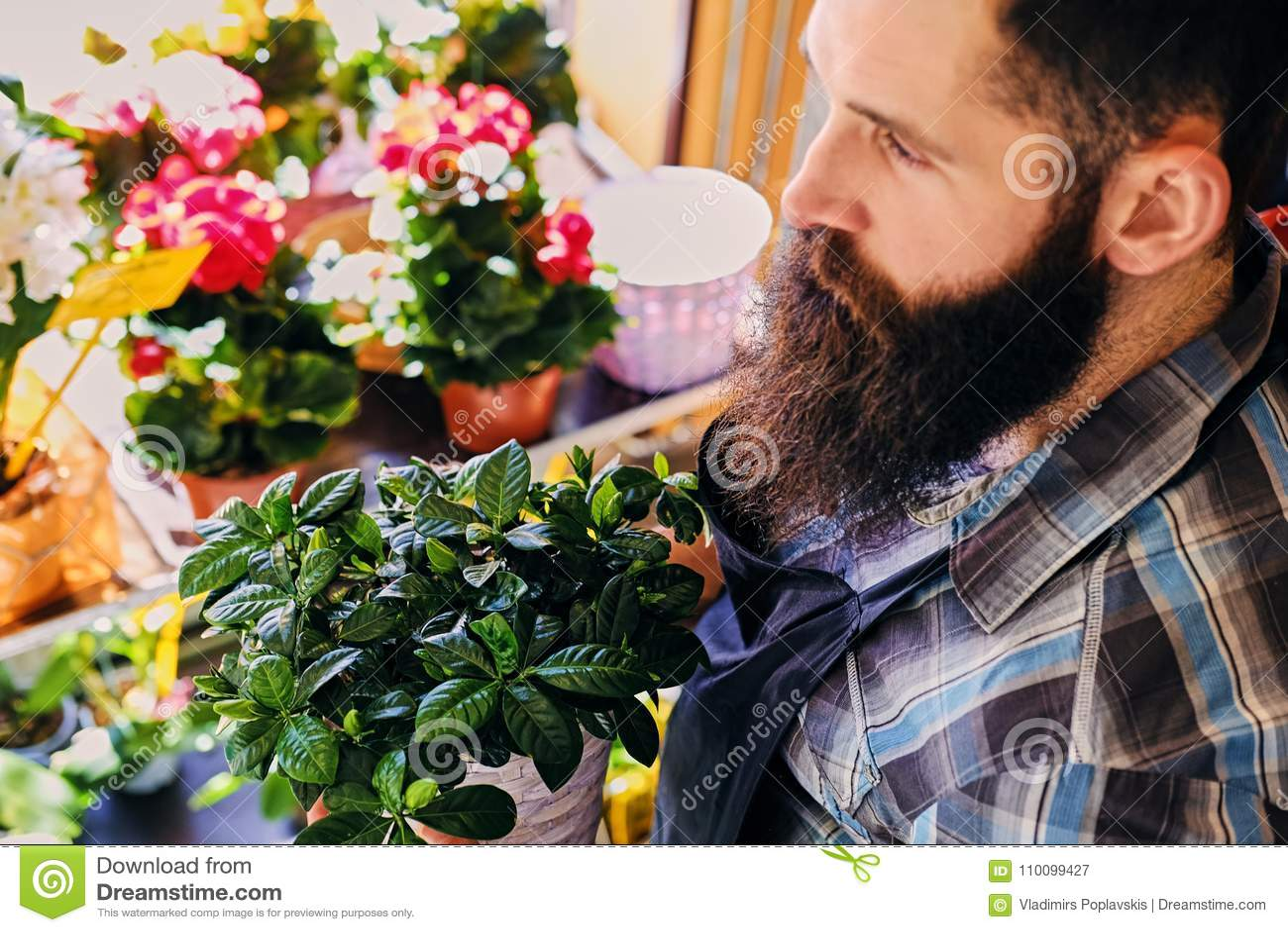 有纹身花刺的残酷有胡子的花卖主在他的在flowe的胳膊