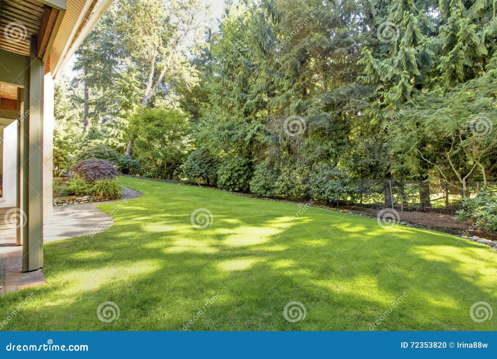 有美丽的草坪的绿色弹簧恢复围场