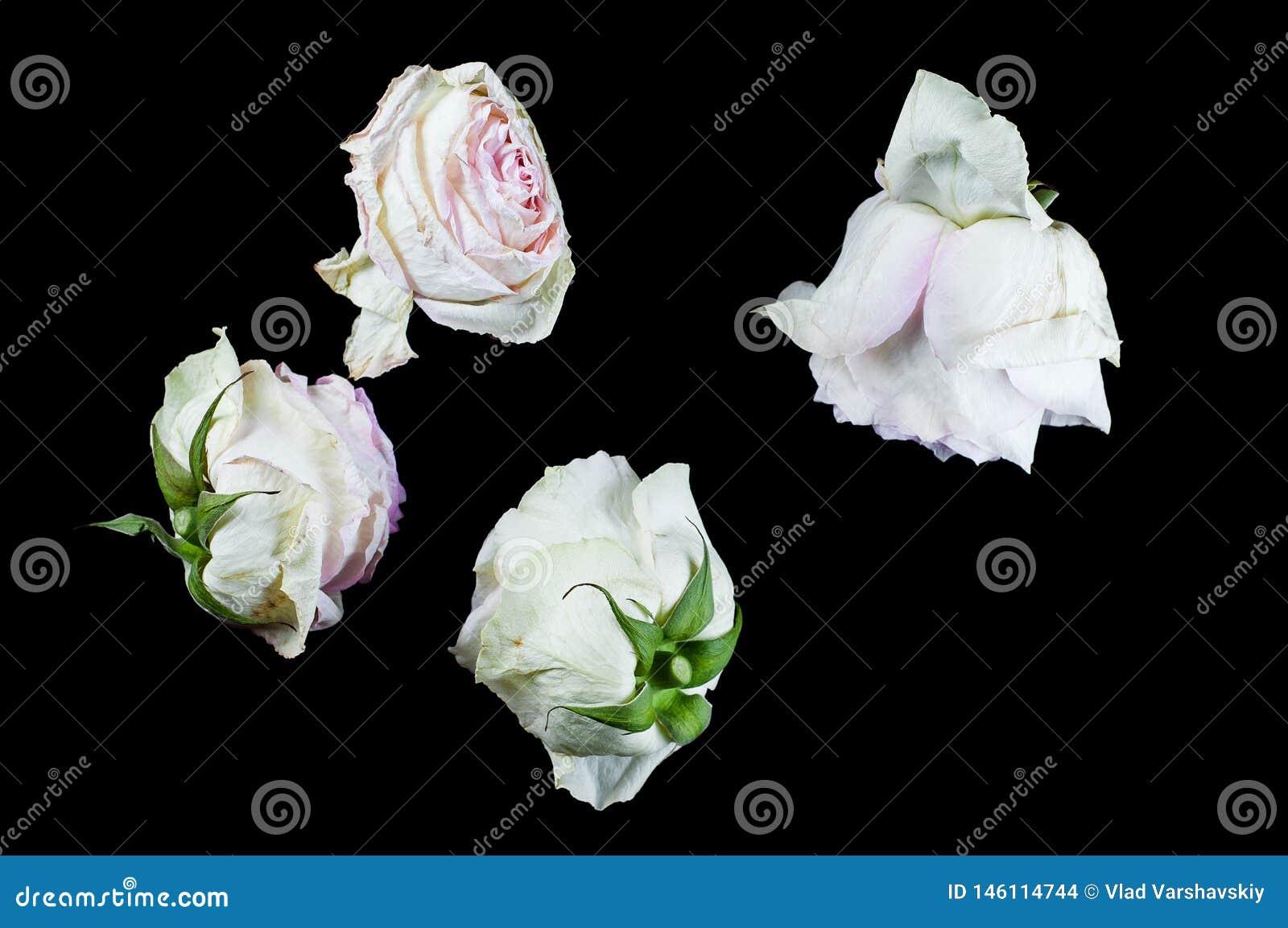 有芬芳花的美丽的植物如室内