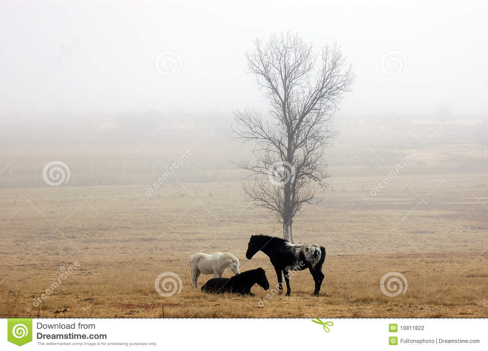有薄雾域的马
