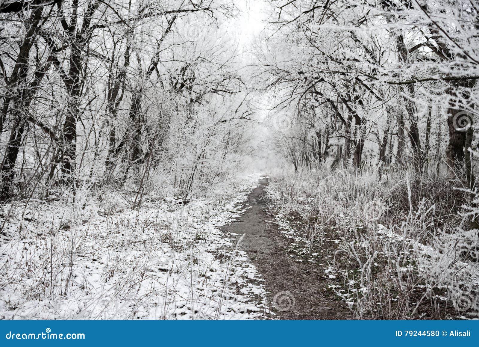 有覆盖物的圣诞节神奇冬天多雪的森林分支
