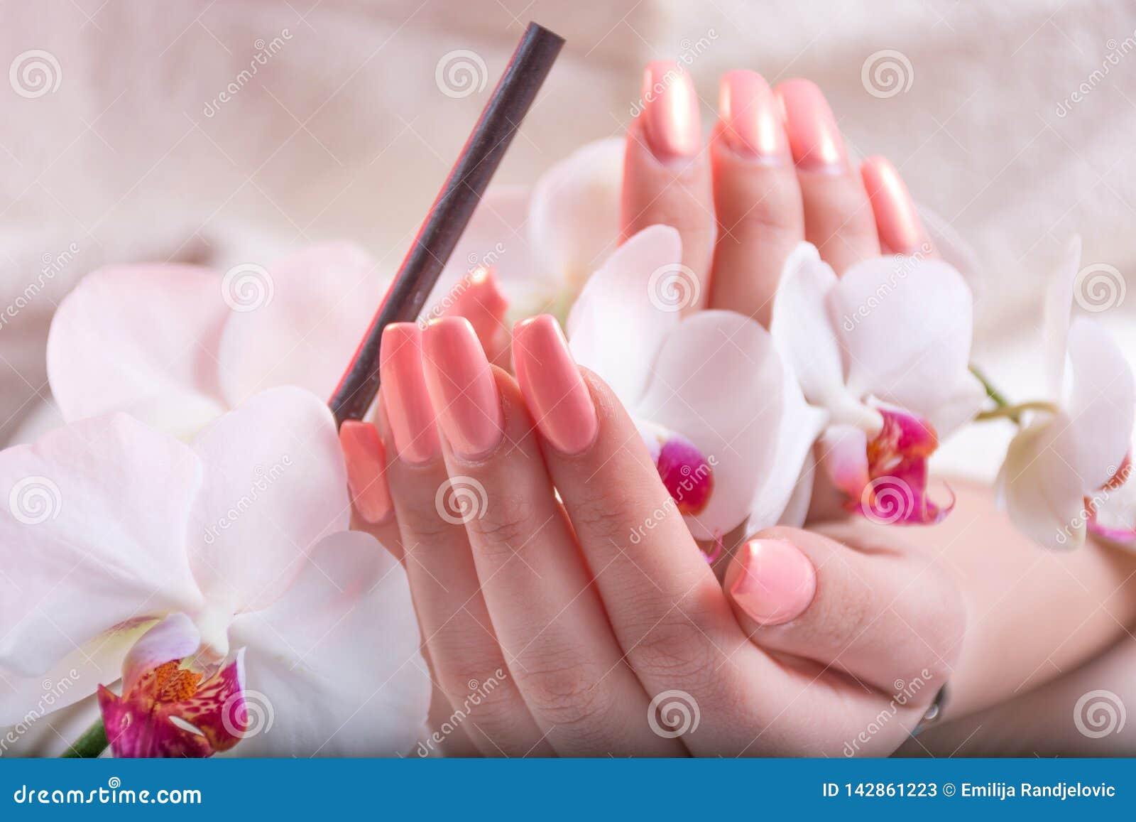 有轻轻地桃红色的女性手指甲油拿着白色兰花的春天颜色在秀丽演播室开花