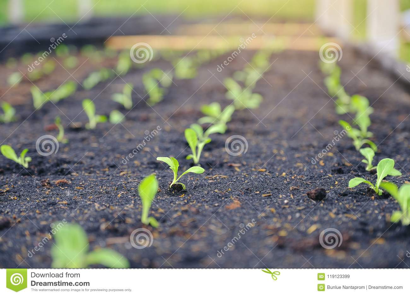 有选择性绿色幼木,小树苗特写镜头在庭院里