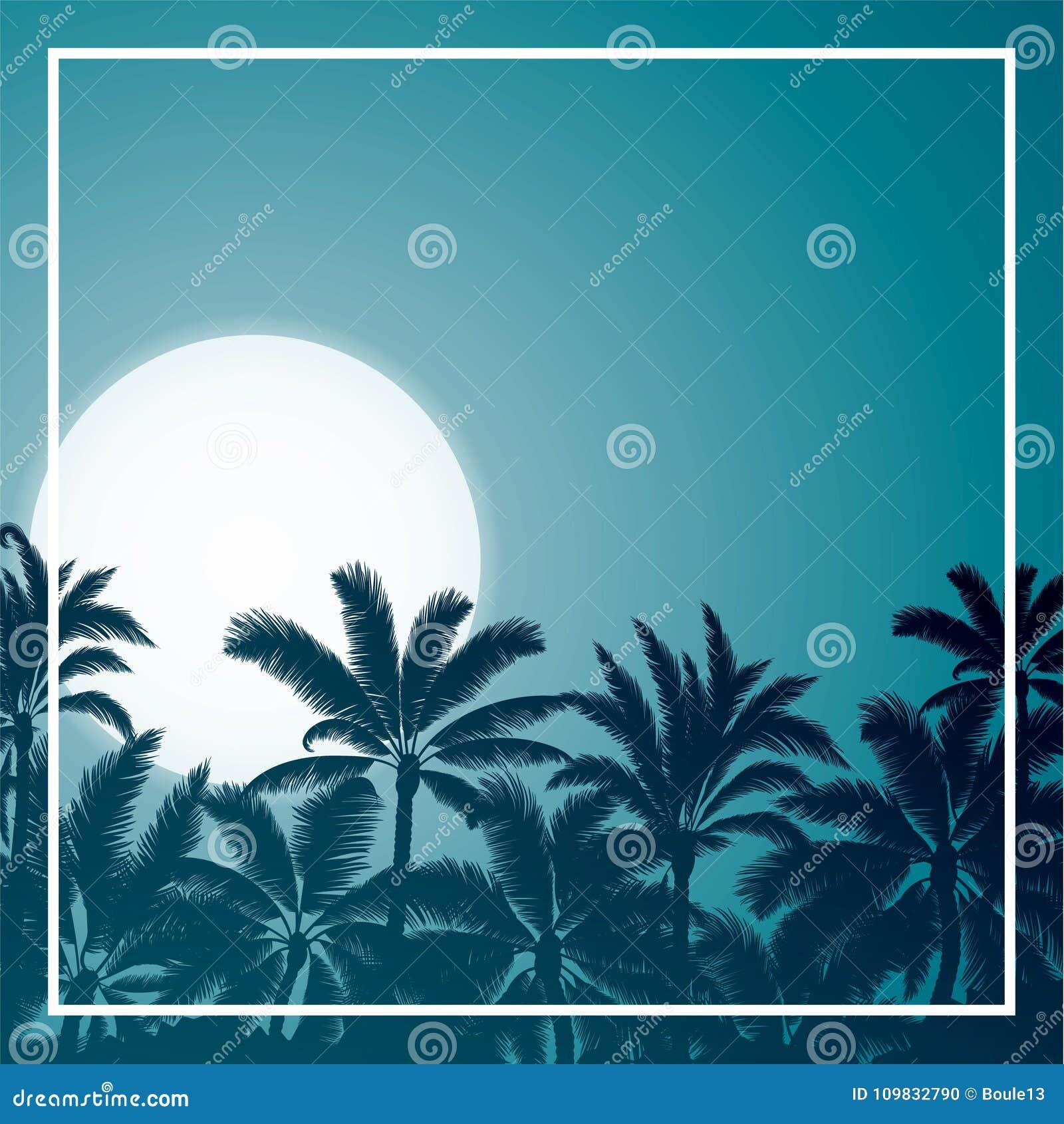 有长久日出和夜空的热带棕榈