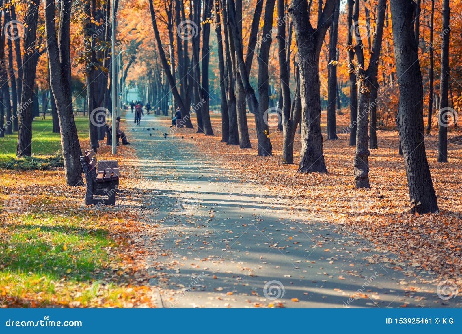 有长凳的美丽的风景早期的秋天胡同在树和金黄色的叶子醉汉之间在城市公园 人行道
