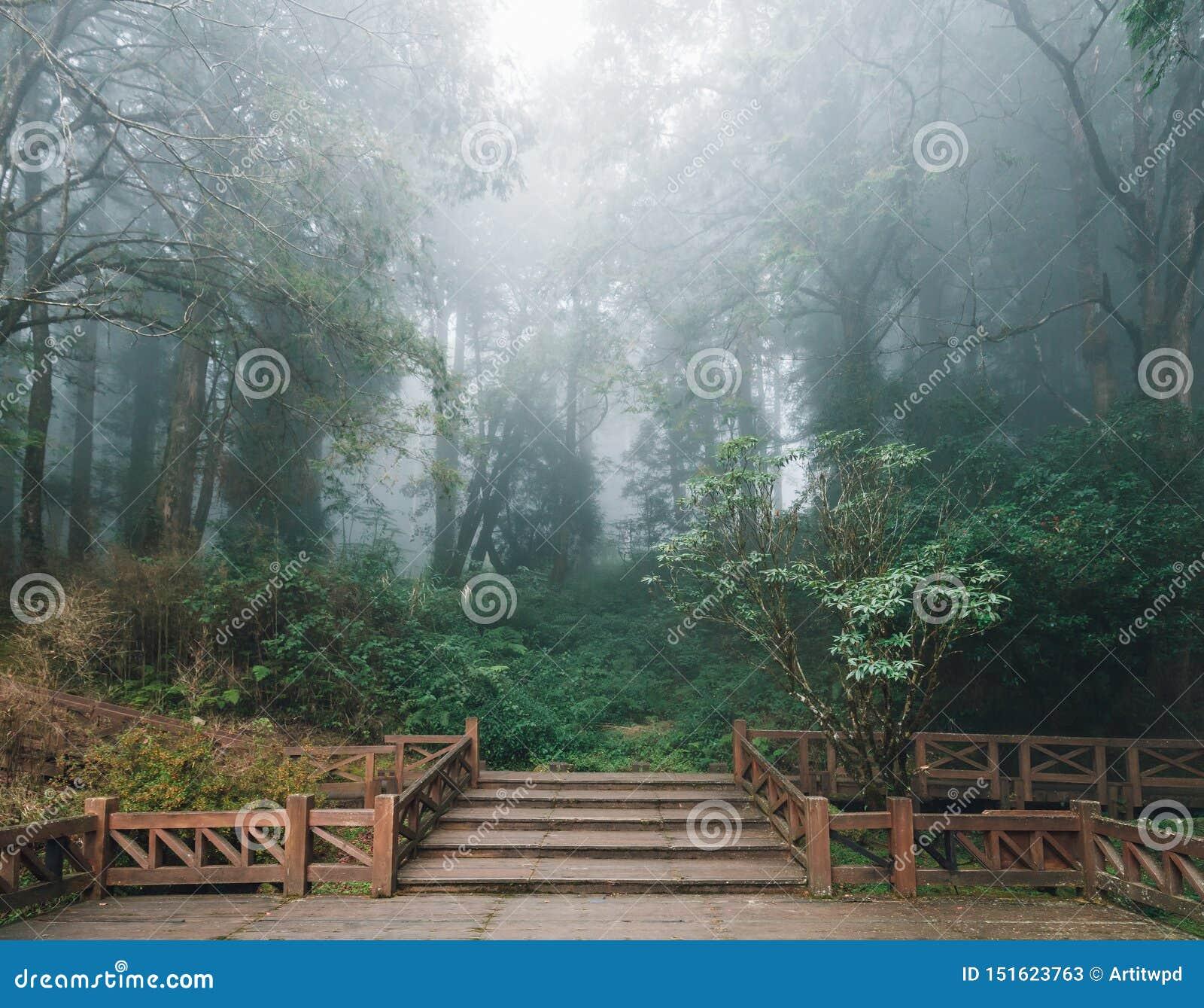 有雪松的木平台和雾在背景中在森林里在阿里山国家森林度假区在冬天