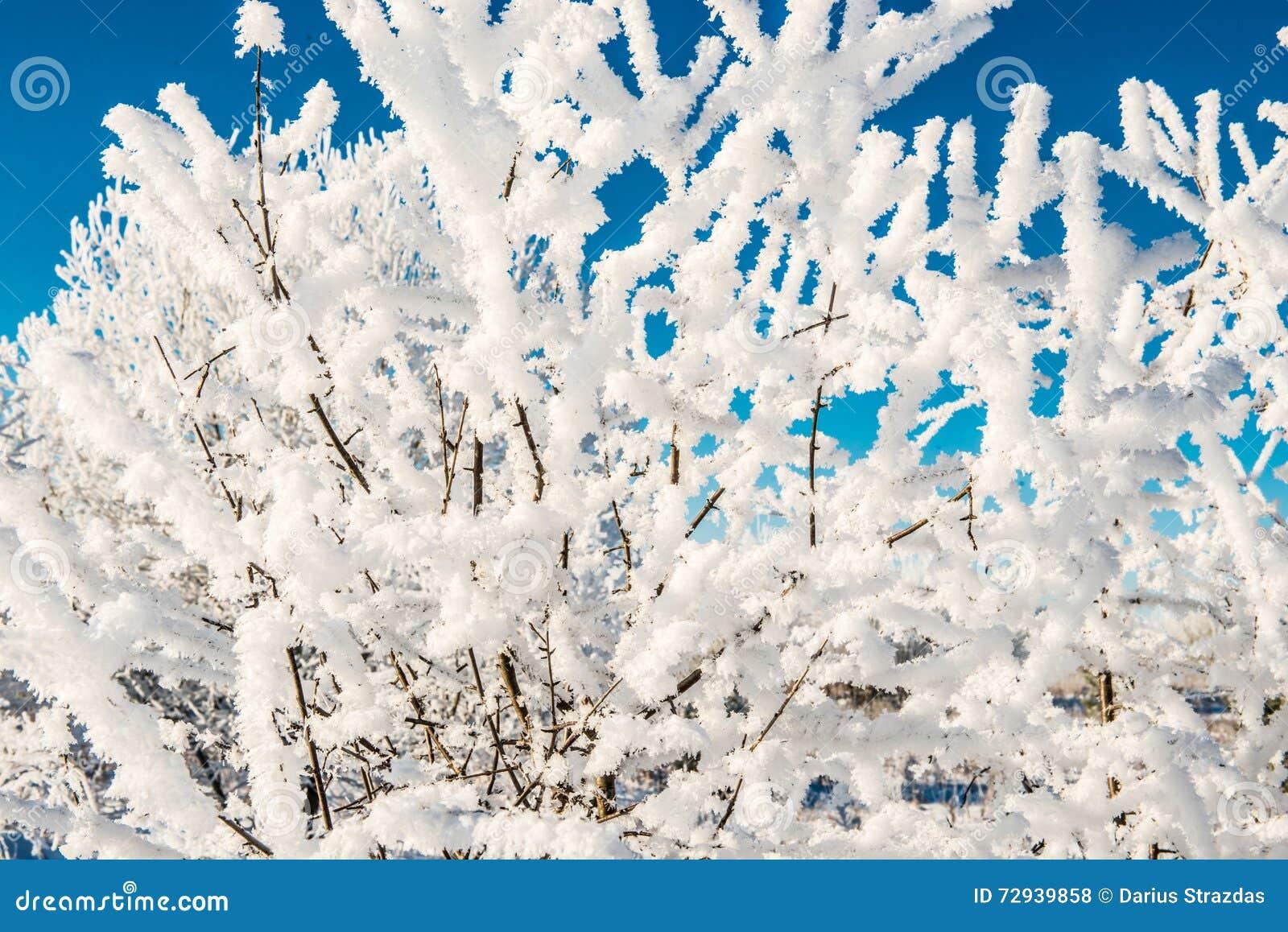 有雪的小的枝杈