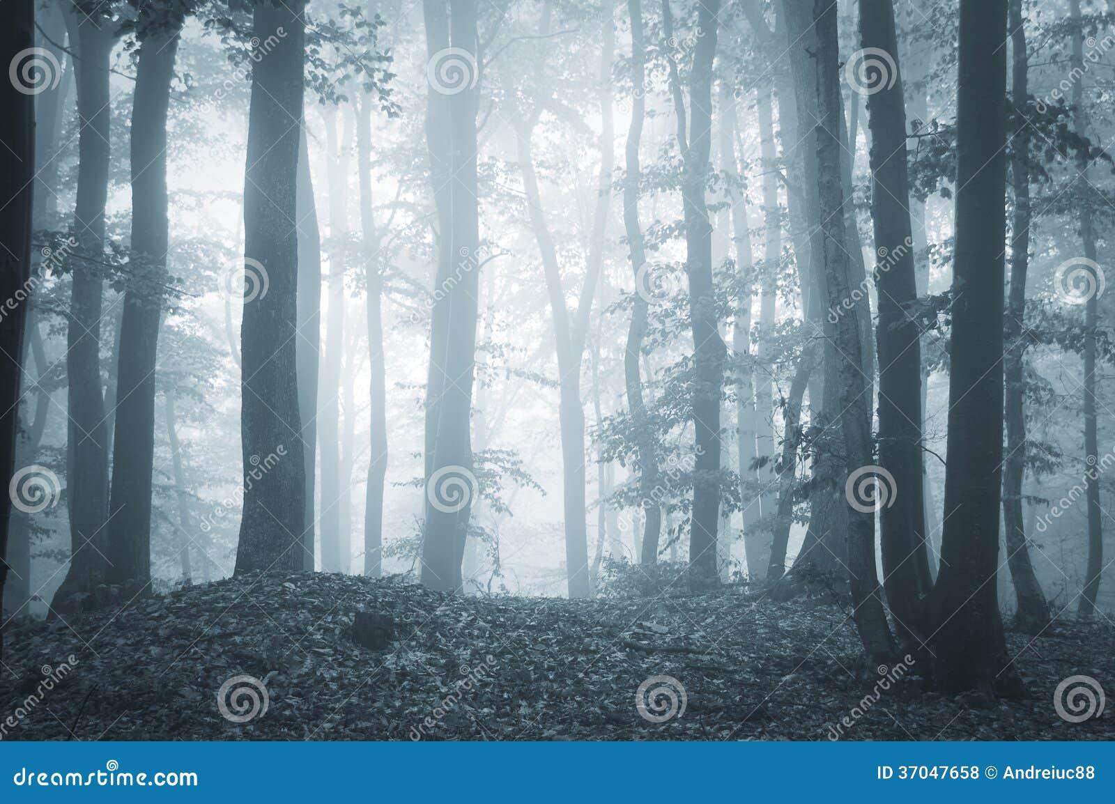 有雾和光的令人毛骨悚然的森林