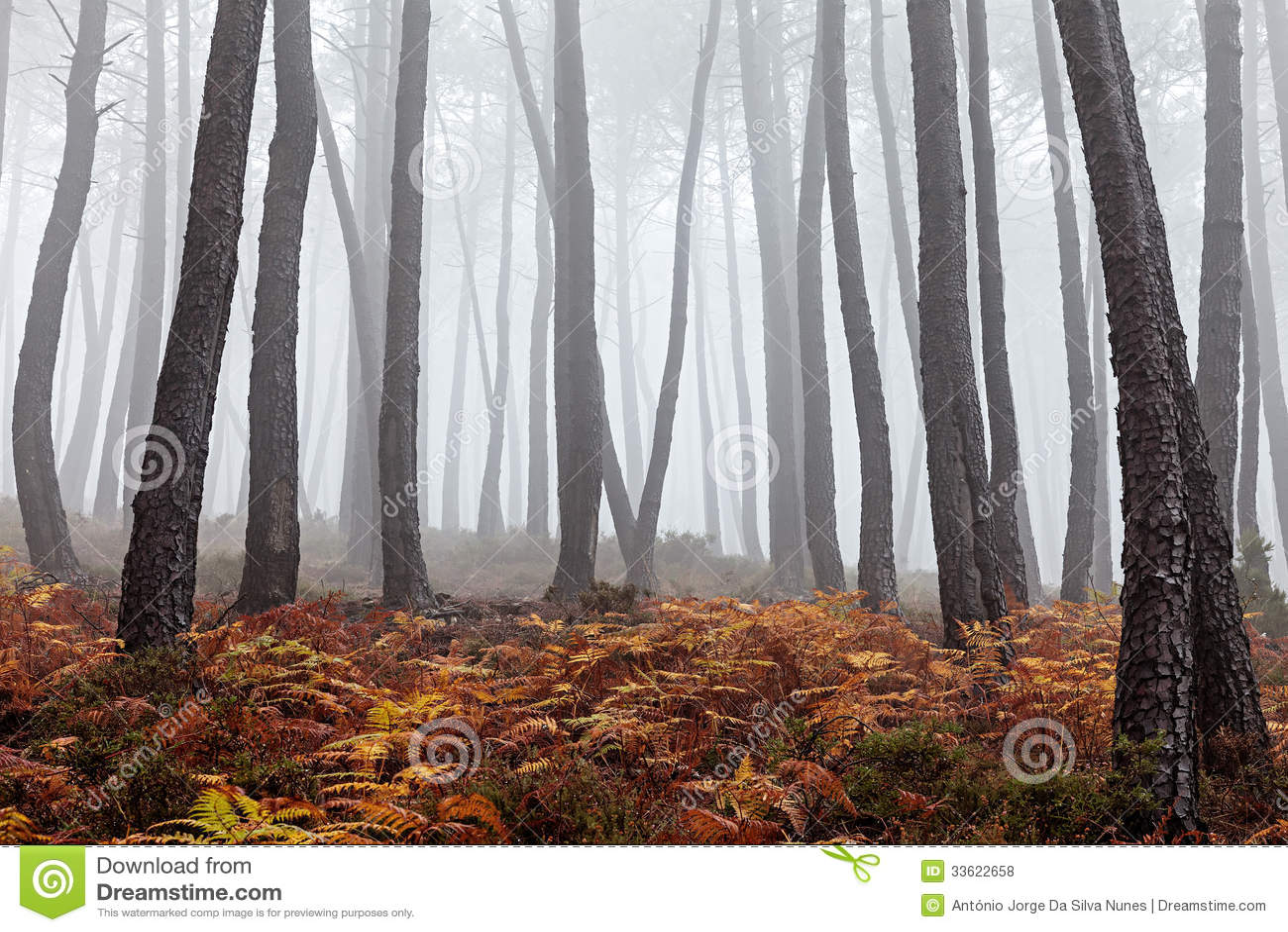 有雾的森林
