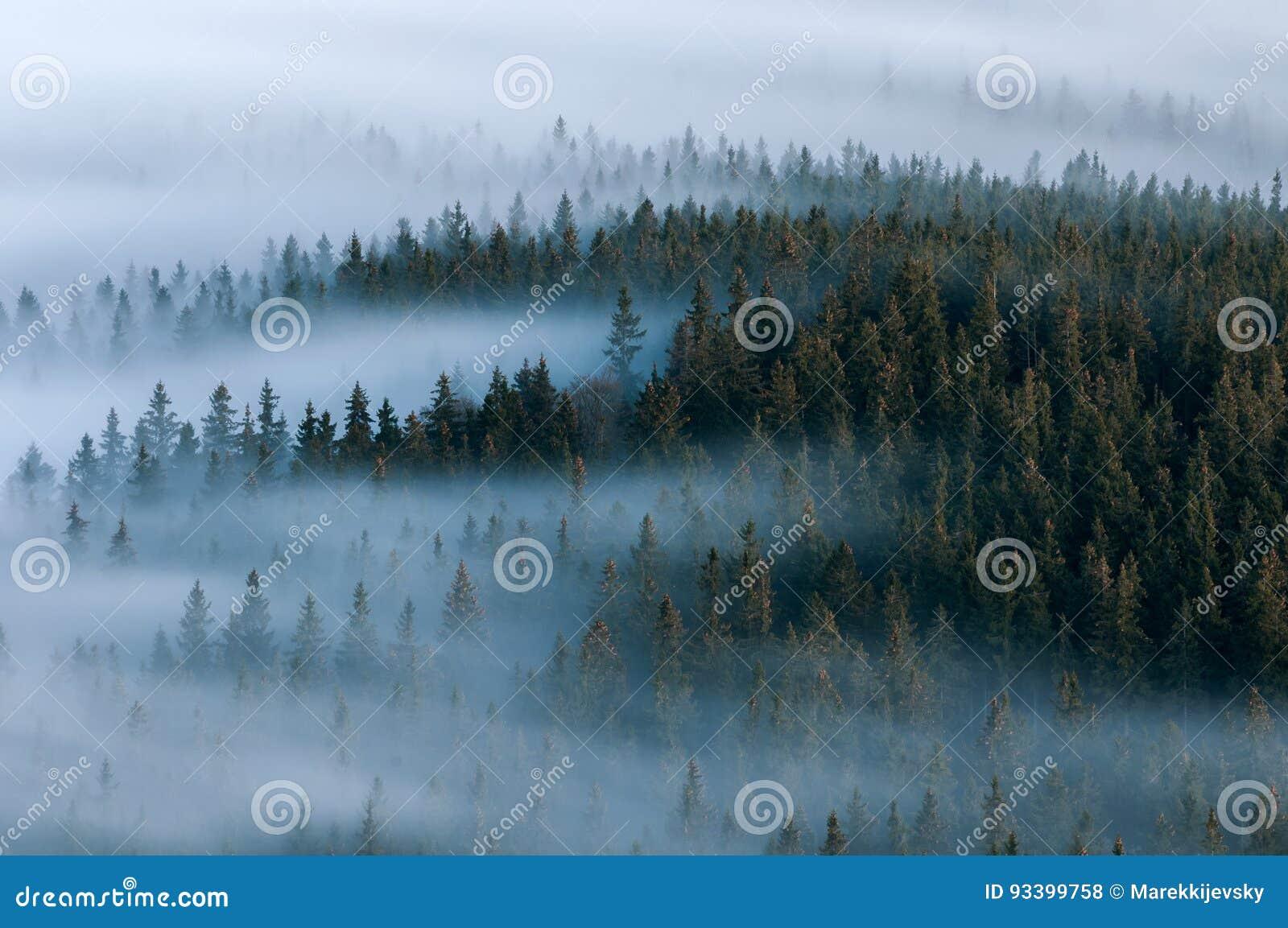 有雾的横向 Sumava国家公园有雾的谷  森林,捷克的Boubin山细节