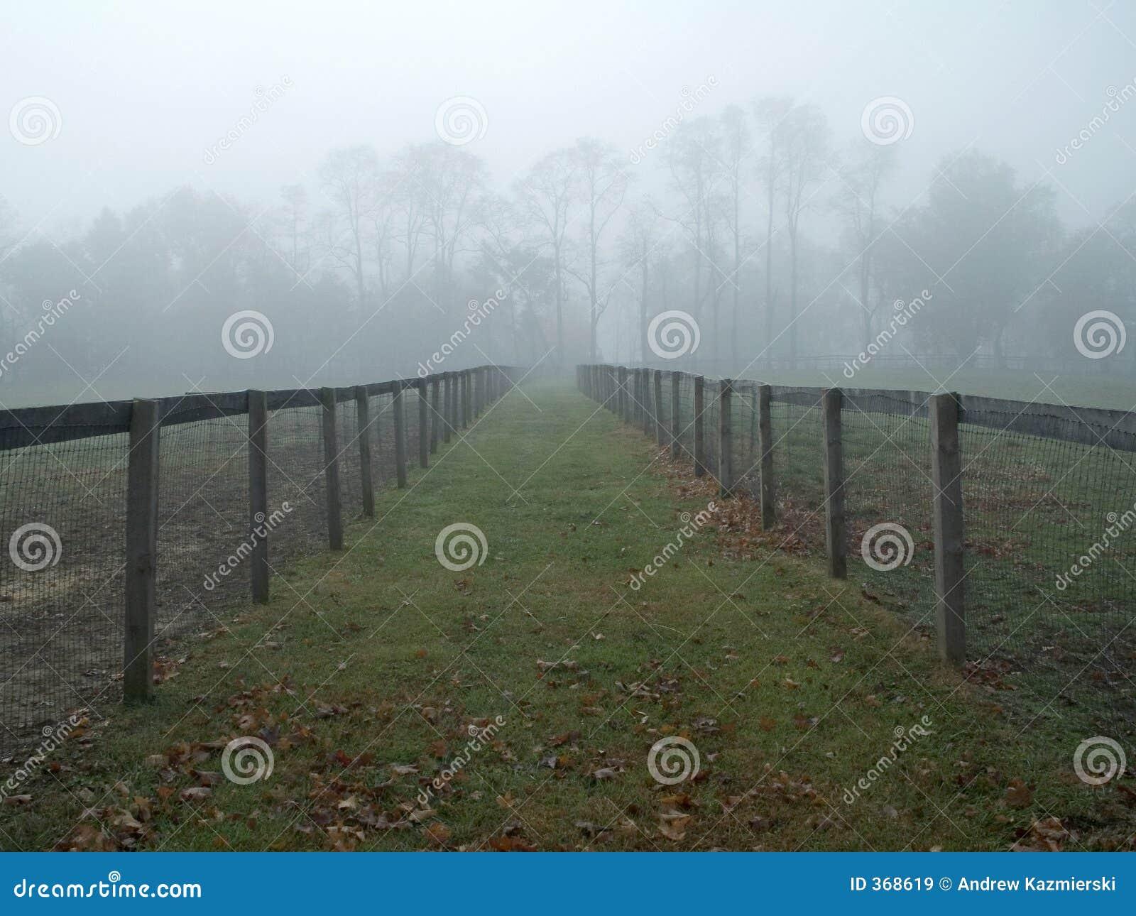有雾的牧场地